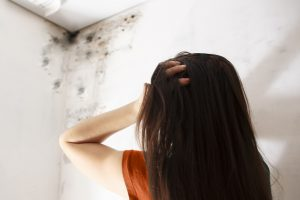 professional mold removal sandusky, mold removal sandusky, mold cleanup sandusky