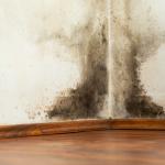 mold cleanup sandusky, mold removal sandusky