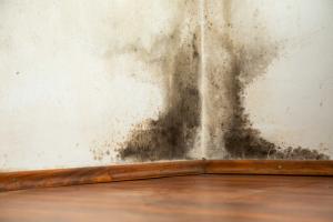 mold removal sandusky