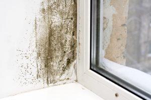 mold removal sandusky, mold cleanup sandusky, mold testing sandusky