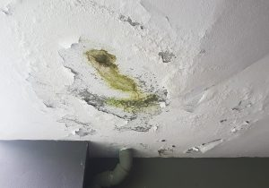 mold removal sandusky, mold remediation sandusky, mold cleanup sandusky